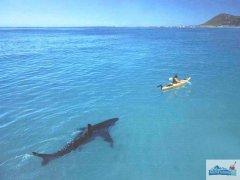 Каяк и акула