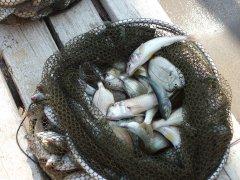 Рыбалка в Крыму-2.jpg