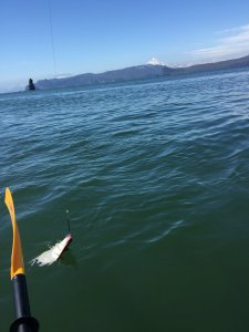 рыбалка в Авачинской бухте