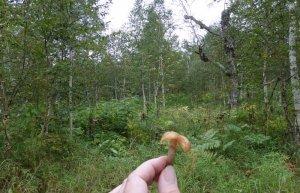 В нашем лесу