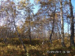 Паратунский лес
