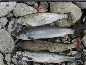 Улов во время сплава по реке Быстрая