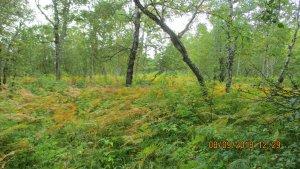 Паратунский лес.JPG