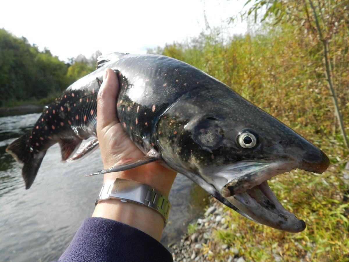 река Левая, рыбалка.