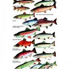 Слава Рыбаков 86